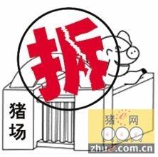 """江苏宜兴已拆猪舍面积7万余平方米 明年生猪""""零养殖?"""
