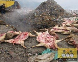 湖南长沙县:半吨疑似病死猪肉惊现江背废弃猪场