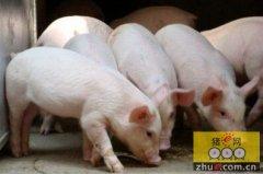 黑龙江宝泉岭管理局:创新发展生猪养殖业
