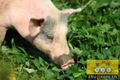 黑龙江:宝泉岭管理局创新发展生猪养殖业