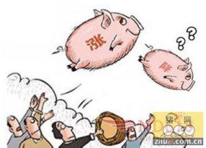 年底猪价走势如何?从猪市的利好与利空说起
