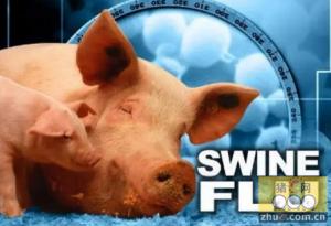 中国科学家认为类禽H1N1猪流感病毒可能引发人流感大流行