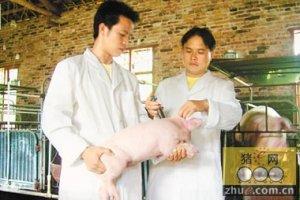猪场爆发疫情后的应对措施,建议老板收藏!
