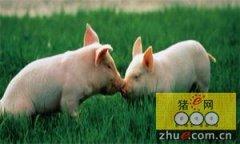 美国麦当劳欲让供应商废止母猪妊娠箱善待动物
