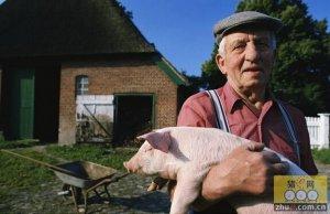 欧盟肉类产量提高 将推动蛋白粕用量增长