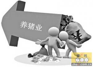 10个观点看中国养猪的过去和未来