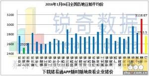 2016年1月6日料评:粮价价差拉大华北粮优势明显