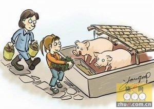 猪少,猪贩子都急哭了,还愁不涨价!