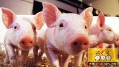 南方寒冷季节生猪管理方法