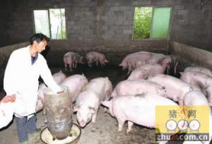 寒冬养猪控制猪舍温湿度最要紧