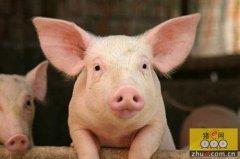 一起探讨:中小猪场是转型还是退出?