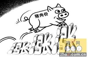 猪价持续上涨 破9地区逐渐增多