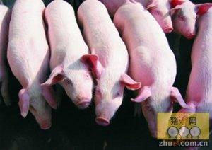 市场走势分化 猪价南稳北弱