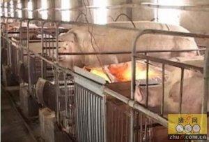 猪场冬季产房什么问题比较多呢?展示产房发病情况、病原检测结果及防控