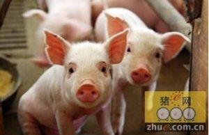 加拿大猪生产商将在2016年继续受益于美元升值