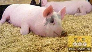 河北平泉县台头山乡发展生态循环养猪业