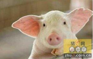 低聚木糖对仔猪黄白痢发生率的降低作用
