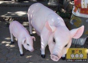 如何判定您的母猪是否全部产完?