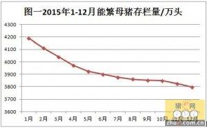 2015中国养猪业大战过剩产能 淘汰能繁母