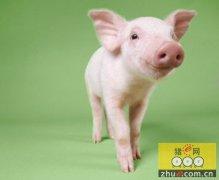 四川:名山农民猪业专业合作社抱团合作 分红众乐