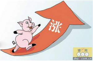 临近春节安徽生猪价格明显上涨