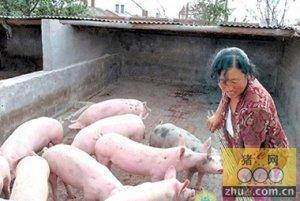 生猪养殖结构或将向纺锤形转变,散养户生存空间被挤占