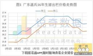 消费区域性转移严重,广东猪价相对低位