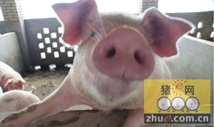 排污不达标村支书被处罚 养猪环境差7人被问责