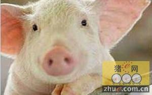 辽宁省生猪价格高位企稳 预计春节后不会快速下降