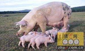 德国生猪存栏量创2011年来的新低