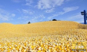 俄罗斯计划显著增加对华粮食出口