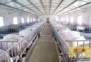 养猪人必看的几个猪场综合管理措施关键点
