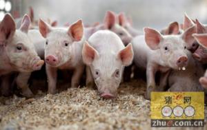 缓解生猪市场价格周期性波动 河北修订调控预案