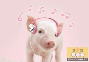 仔猪保育期的营养管理