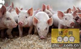 """黑龙江大庆畜牧业到2020年将形成""""两牛一猪三禽""""养殖格局"""