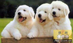 三个卖狗人,给你上堂别样的营销课~~