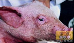 微观点之小谈猪群保健与药防