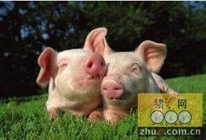 生长育肥猪的饲养管理和保健措施