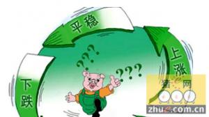 """春节出栏黄金期来临  是否能打破""""逢节必跌""""魔咒?"""