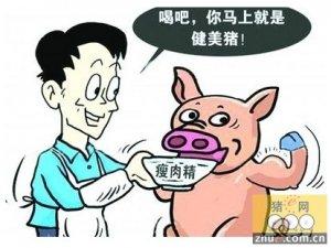 突袭养猪场检测瘦肉精在四川成都已成为常态