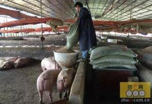 你相信一个人一台机器养200头猪吗?