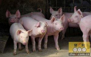 去年生猪销量降超两成,今年猪价保持高位概率大