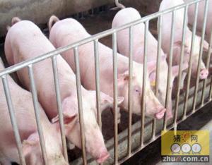 洪水淹没肉联厂 猪肉供应未减少