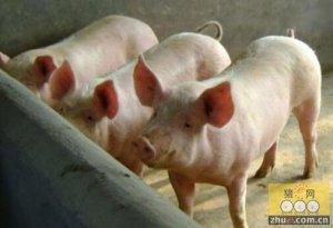 一季度生猪存栏或再降 能繁母猪亦难见底