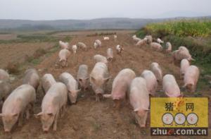 加码湖南生猪业务 大康牧业投资七千万元设合资公司