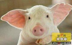 浅谈养猪过程中的养殖福利与环保问题