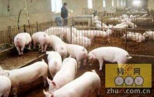 从猪场管理四大方面教给你怎么能让猪少生病?