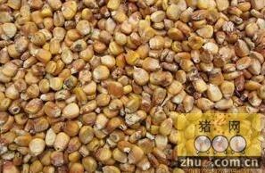 第二百七十三篇 玉米人为加水发霉