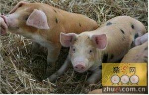 2015年西班牙生猪屠宰数量与2014年相比增长了7%