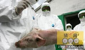 立陶宛新暴发六例非洲猪瘟